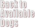 Back to  Available Dogs